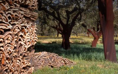 Se estima una producción de corcho este año en Extremadura de unas 24.000 toneladas
