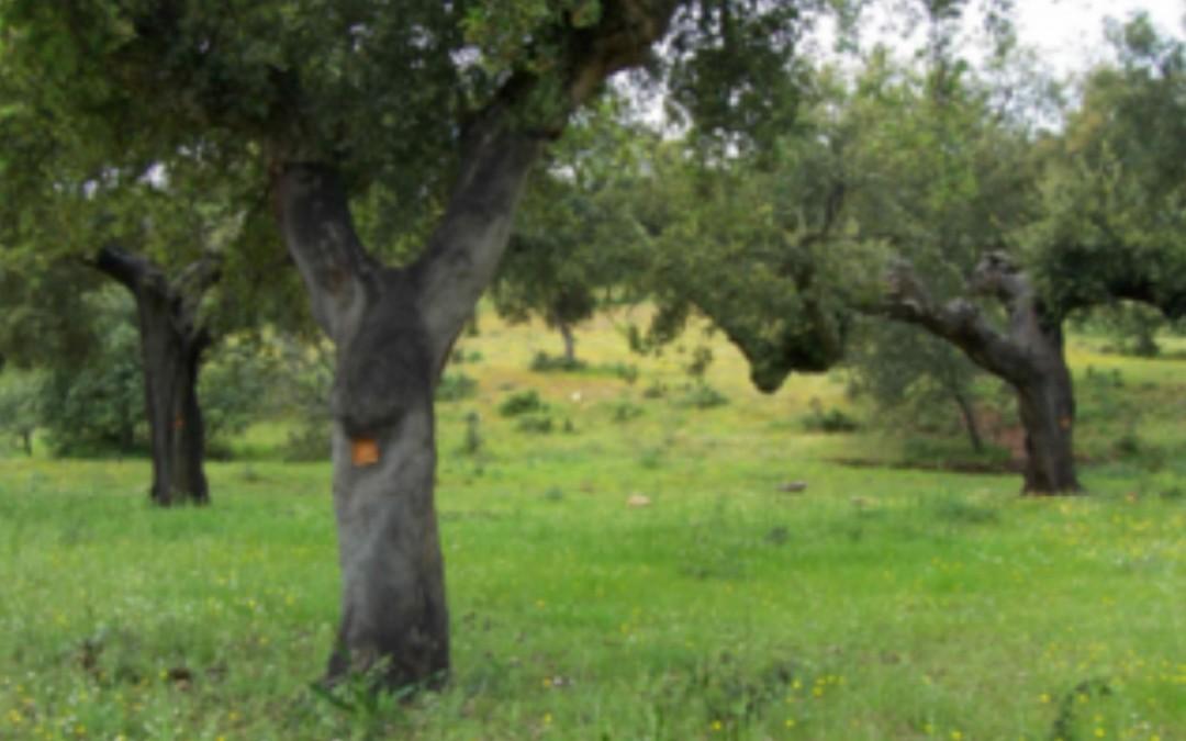 Plan de Calas, controlando la calidad del corcho