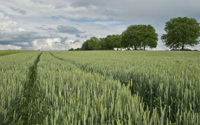 Se invertirán 600 Millones para modernizar el sector agrario en Extremadura