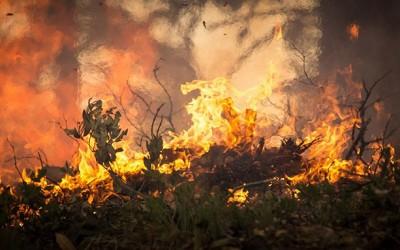 12 detenidos y 5 investigados por incendios forestales en Cáceres en lo que va de año