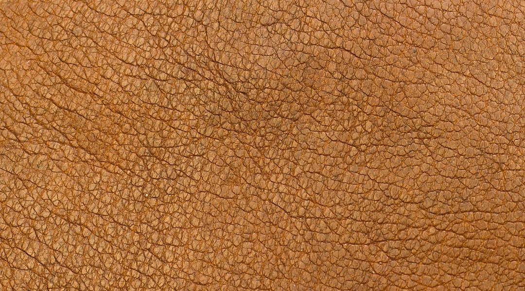Corcho: la alternativa vegana y sostenible al cuero