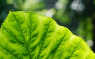 Extremadura presenta su estrategia verde en el Congreso Nacional de Medio Ambiente