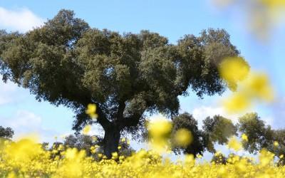 Las dehesas andaluzas contarán con 11,7 millones e euros en ayudas para mejorar sus pastos