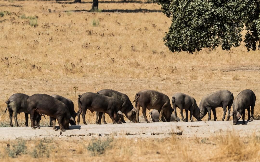 El cambio climático ya se nota en Extremadura