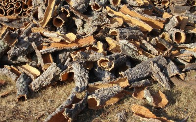 Baja la producción de corcho debido a la sequía